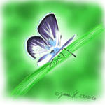 Butterfly by Yorulla