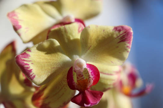 orchid^^
