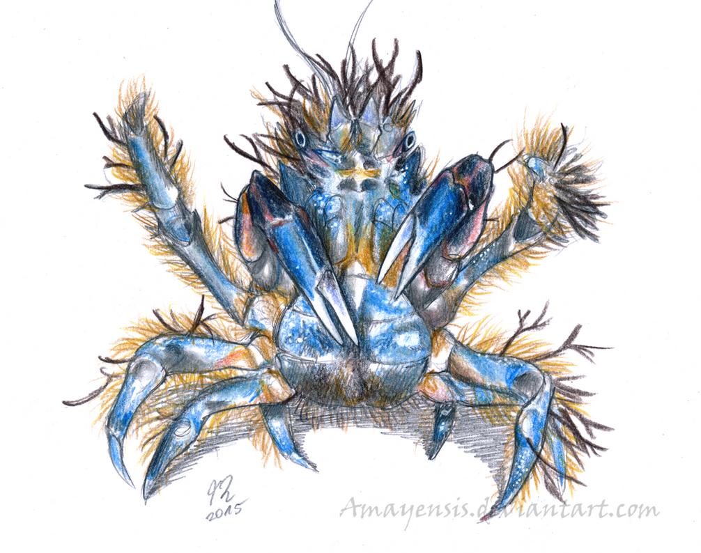 crab sea animals marine information and decorator photo decor corallimorph picture