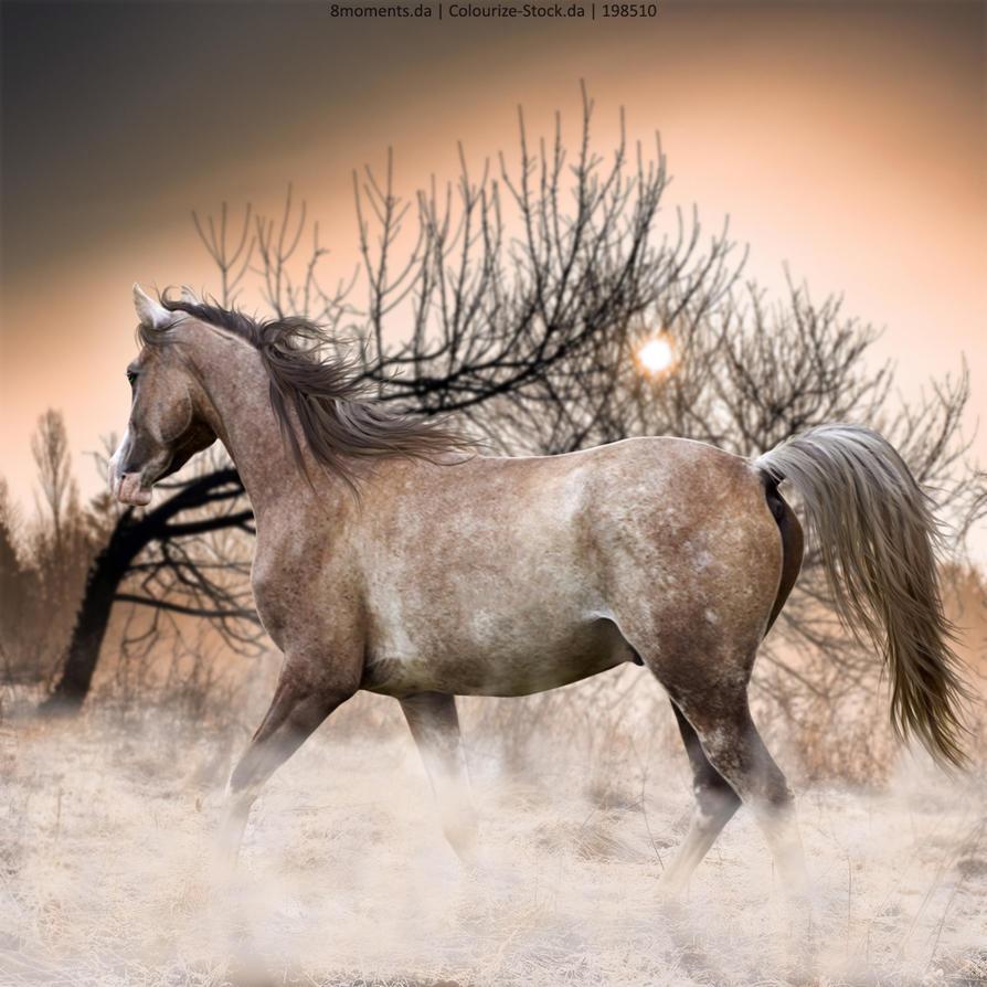 Premade-~-Arabian-Roan-(Full-Size) by KeonahN