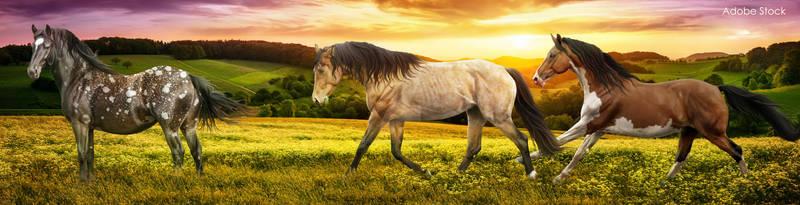 Art-Contest-~-3-Full-horse-banner-(Full)