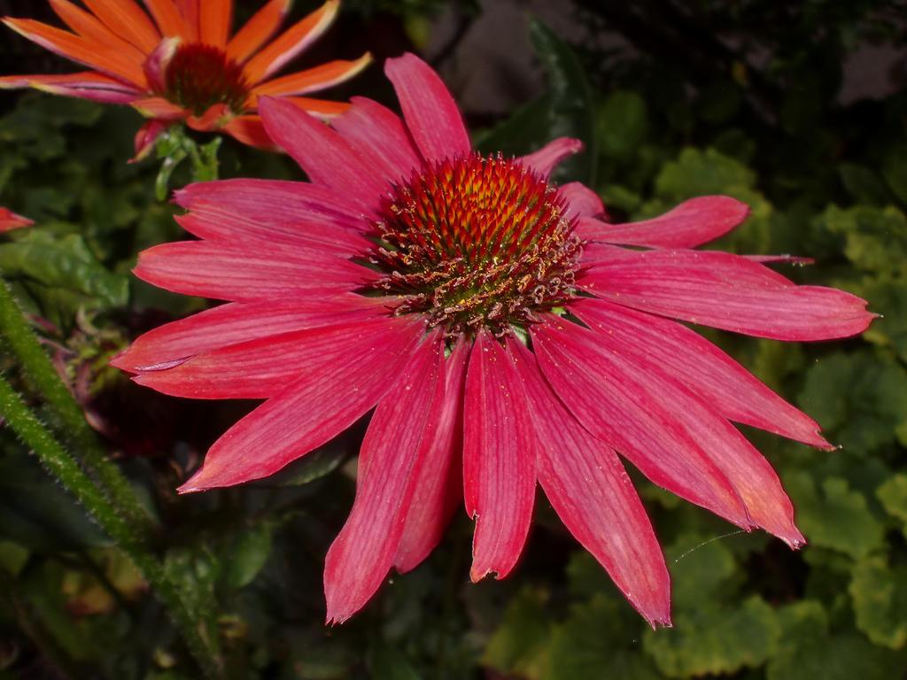 silence flower by klecks84