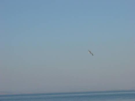 Sea was calm