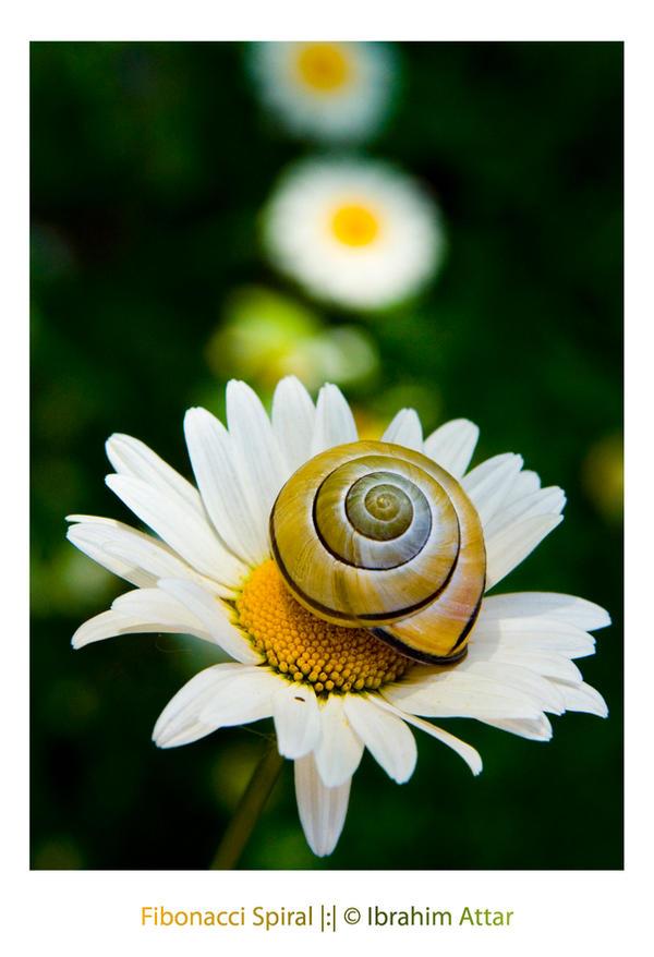 Fibonacci Spiral by biroo87 on deviantART