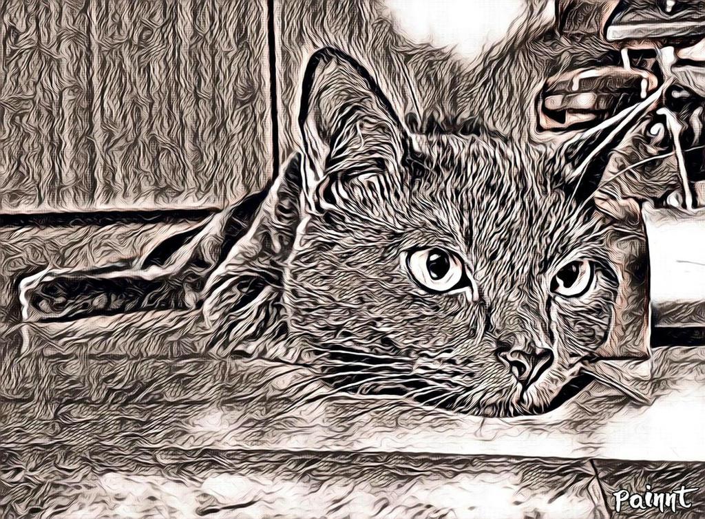 Transformed cat... by vdf