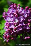 Blooming Garden by Morphine-Cloud