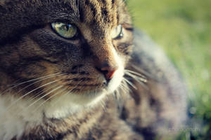 Cat eye by sisselPhotography
