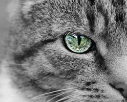 Cat eye III by sisselPhotography
