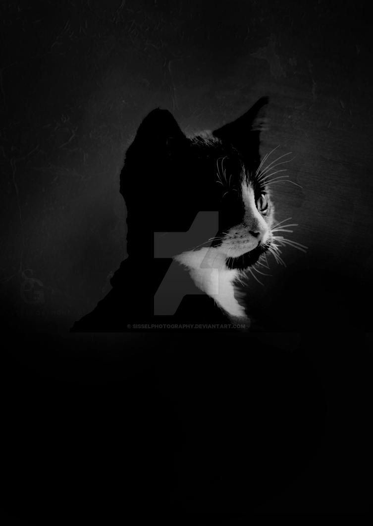 Sir Catalott by sisselPhotography
