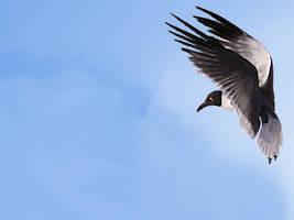 Seagull II by Daking9