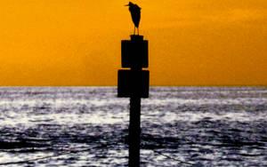 Seagull III by Daking9