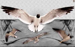 Seagull V - Digital by Daking9