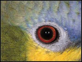 Amazon Eye by cycoze