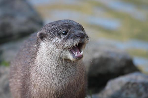 Animal de métamorphose : Nemo d'Amaël Otter_by_cycoze