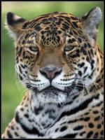 Jaguar by cycoze