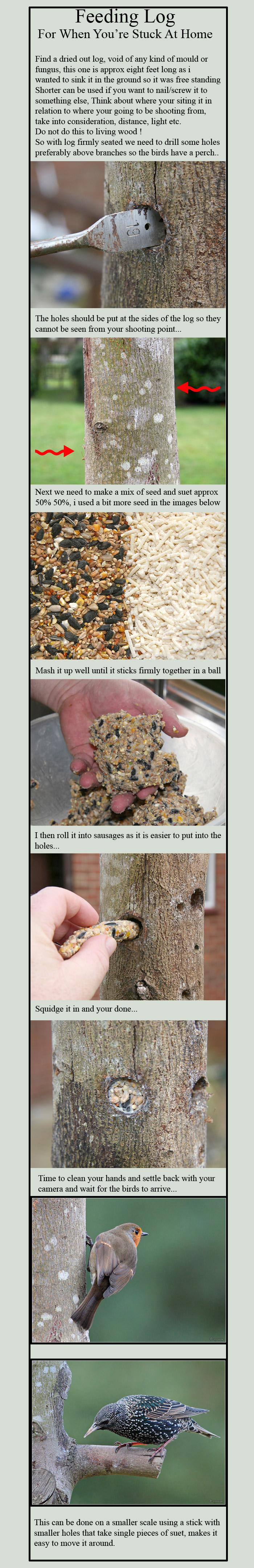Bird Feeding Log Tutorial by cycoze