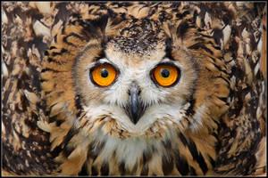 Eagle Owl Defense