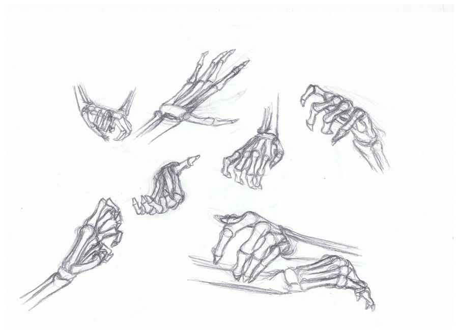 Human skeleton hand drawing human skeleton hand drawing photo22 ccuart Images