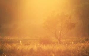 Sunny by ferrohanc