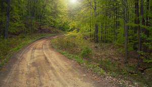 Spring Forest Road by ferrohanc