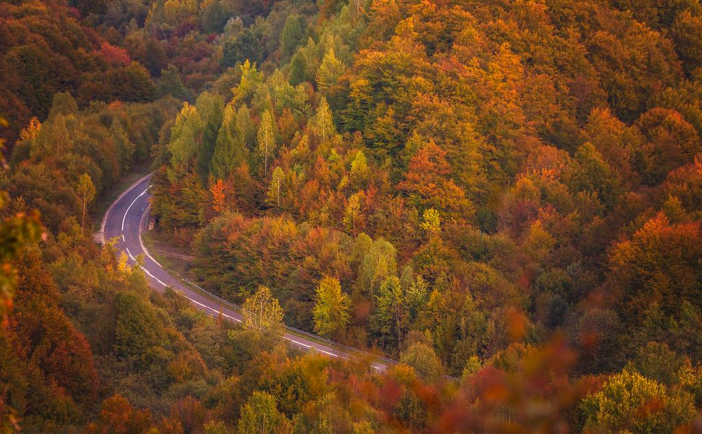 Road to Autumn by ferrohanc