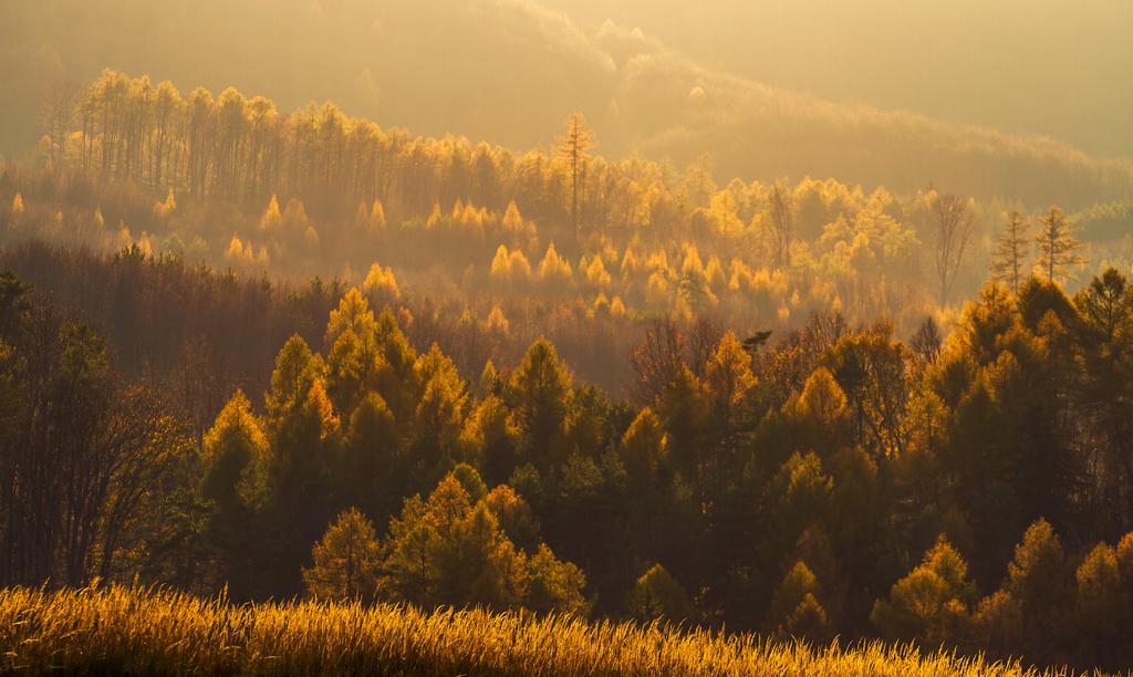 Autumn Magic II by ferrohanc