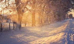 Snowy Morning by ferrohanc