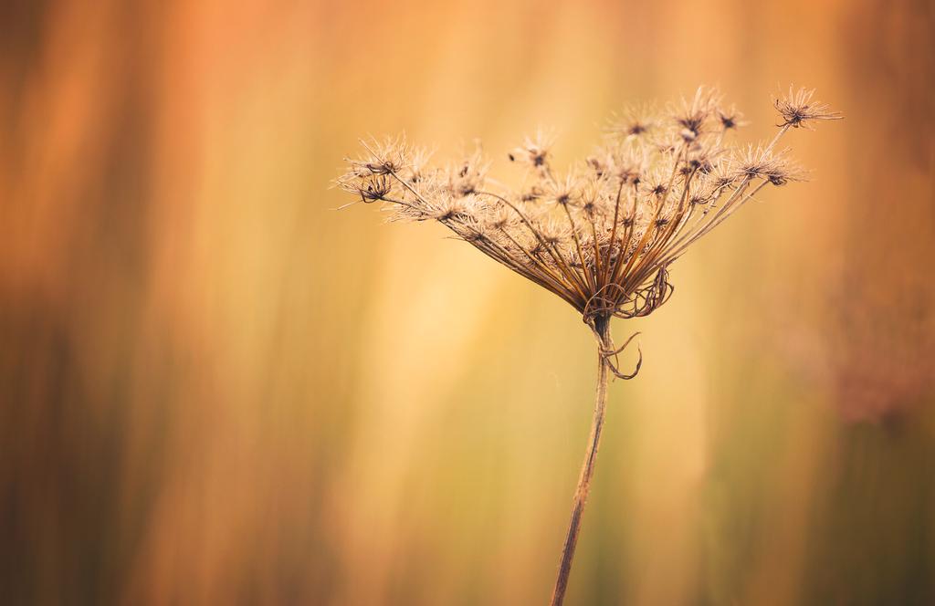 Autumn Touch by ferrohanc