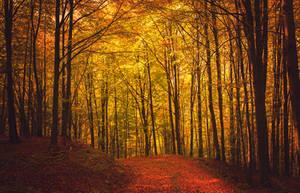 Autumn Touch III by ferrohanc