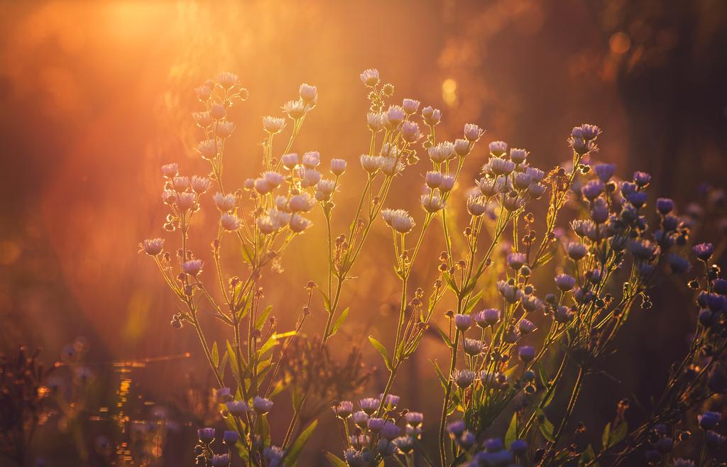 Sunny Dreams by ferrohanc