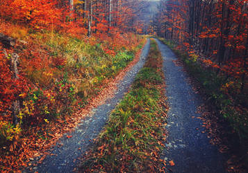 Autumn Road by ferrohanc