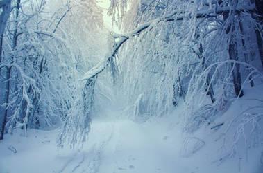 Cold Morning by ferrohanc