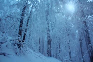 Cold Morning II by ferrohanc