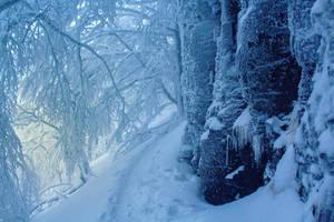 Cold Morning III by ferrohanc