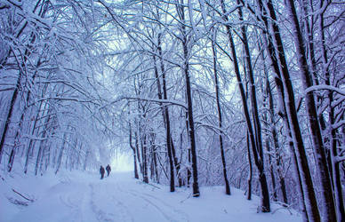 Cold Forest by ferrohanc