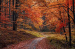 Autumn Forest Road by ferrohanc