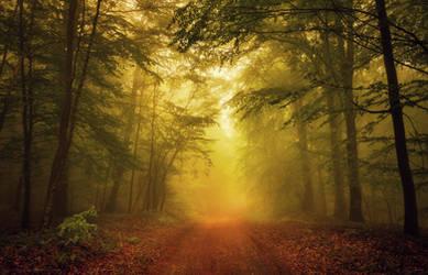 Sunny Forest by ferrohanc
