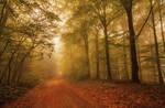 Autumn Morning by ferrohanc
