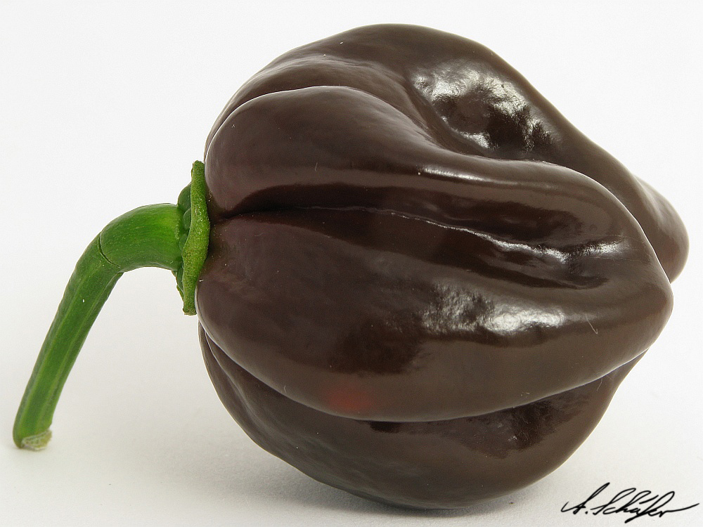 Habanero Chocolate by Stratege on DeviantArt