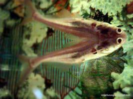 the Pisces by ninjaGurung