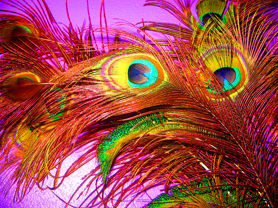 neon peacock wallpapers - photo #29