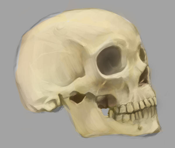[Image: bone_head_study_1_by_tddigital-d4gi90q.jpg]