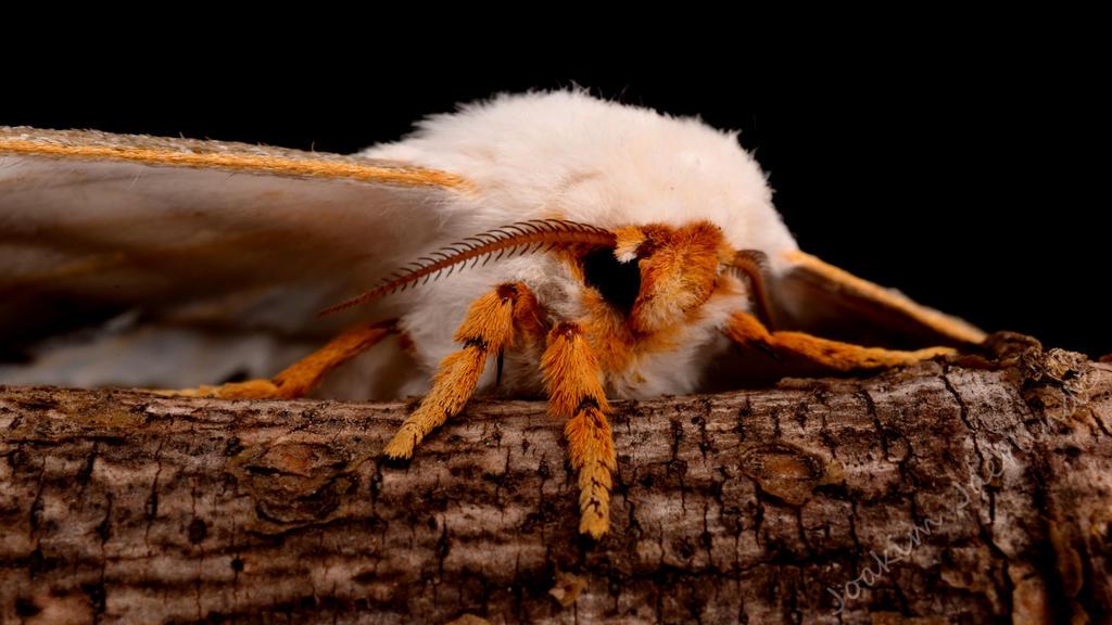 Stunning Moth by jockeaj