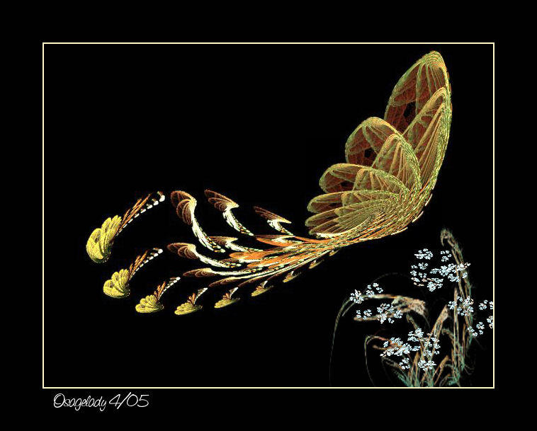 Butterfly in Flight by osagelady