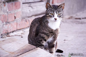 it's a cat's,cat's cat'sworld by dziamalena