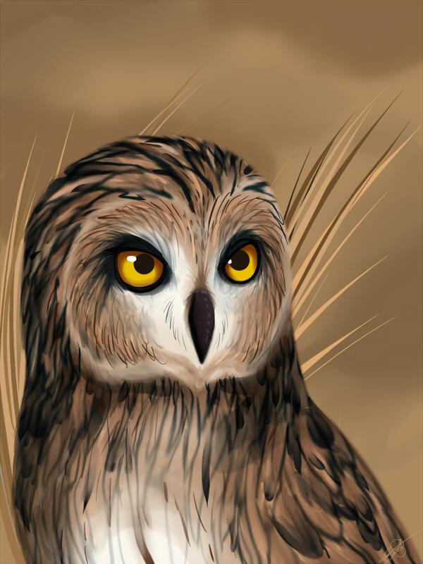 Owl fellow by HikariSilverEye