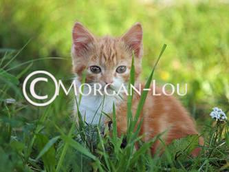 Petit rouquin by Morgan-Lou