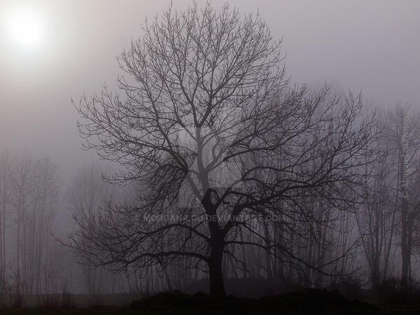 Mystic ash tree by Morgan-Lou