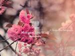 Cerisiers de Mai