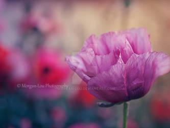 Papillon by Morgan-Lou